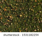 marble   nature   autumn   leaf | Shutterstock . vector #1531182254