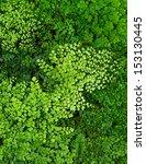 Small photo of Maidenhair fern or Adiantum Fern background