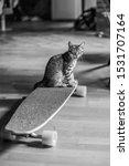 Stock photo kitten yawning while sitting on a longboard 1531707164