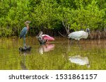 Birds Of The Usa. A Group Of...