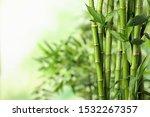 Green Bamboo Stems On Blurred...