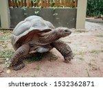 Giant Tortoise Met On The Road...