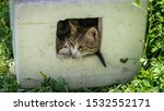 Stock photo mother cat with her kitten in a box both sticking out their heads only 1532552171