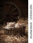Two Kittens Sleeping In A...