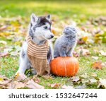 Stock photo husky puppy wearing a warm scarf and kitten sitting on pumpkin look at each other in autumn park 1532647244