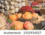 Large Ripe Pumpkins On Straw...