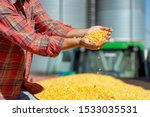 Small photo of Farmer Showing Freshly Harvested Corn Maize Grains Against Grain Silo. Farmer's Hands Holding Harvested Grain Corn. Farmer with Corn Kernels in His Hands Sitting in Trailer Full of Corn Seeds.