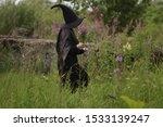 Woman In Black Wizard Hat...