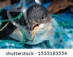 Marine Plastic Pollution And...