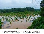 Kerala Flood 2019  Heavy Rain...