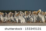 White Pelicans At The...