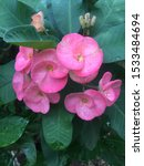 Poi Sian Flowers Color Ping An...
