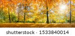 Autumn Forest In Sunlight With...