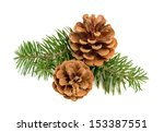 Pine Cones With Branch On A...