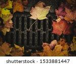Autumn Background Of Fallen...