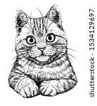 Cat. Graphic  Hand Drawn ...