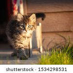 Stock photo manx kittens photographed with a macro lens mm playing in the sunset 1534298531
