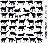 goats collection   vector... | Shutterstock .eps vector #153443741
