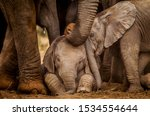 Small photo of Two baby elephants interact whist an adult gently touches them her trunk. Elephants are known for their strong family bonds and caring by and for every member of the herd.