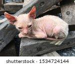 Homeless Asian Kitten Got A...