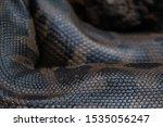 photo of anaconda scales with close up, photo of anaconda coloring, snakeskin close up, leather of anaconda, photo of anaconda snake part