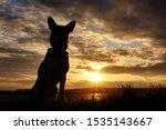 Stock photo silhouettte of a sitting dog with an incredible sunset in the background 1535143667