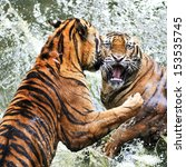 fighting tigers | Shutterstock . vector #153535745