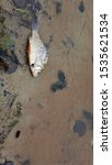 Small photo of Dead fish in polluted water, danger to nature and ecology, concept of people doing harm to the Earth