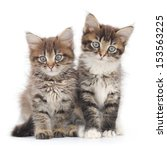 two small siberian kittens on... | Shutterstock . vector #153563225