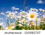 summer field with white daisies ... | Shutterstock . vector #153582737