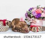Portrait of a cute puppy ...