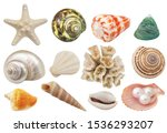 Assortment Of Seashells  Coral...