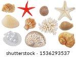 Seashells  Coral And Starfish...