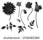 sketch floral botany collection.... | Shutterstock .eps vector #1536482384