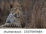 A Young Male Cub Watches Some...