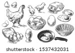 chicken farm fresh eggs. vector ... | Shutterstock .eps vector #1537432031