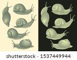 Crawling Snails. Design Set....