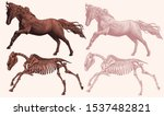 prancing horse and horse...   Shutterstock .eps vector #1537482821