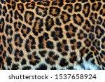 Close Up Beautiful Texture Of...