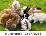 Stock photo group of rabbits eating food in the garden 153770255