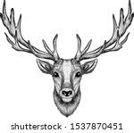 Deer Head With Big Horns Sketch ...
