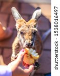 Hand Feeding Orphaned Baby...