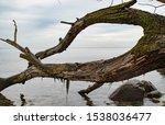 Nature Background  Soft Focus...