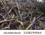 Big Messy Woodpile   Pile Of...