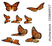 Stock photo collection of monarch butterflies 153840917