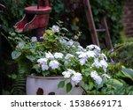 Garden Decoration On Front Ste...