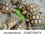 Stock photo close up african spurred tortoise resting in the garden slow life africa spurred tortoise 1538720474