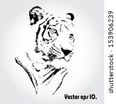 tiger sketch isolated... | Shutterstock .eps vector #153906239