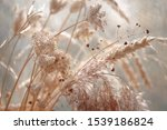 Dried Wild Carrot Flowers...