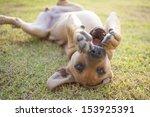 Stock photo funny dog 153925391